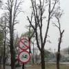 Poziție GAS: Mutilarea copacilor în Parcul Central