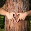 Îți pasă de Parcul Central? Adoptă un copac!